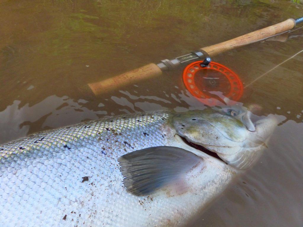 Glæsilegur fiskur